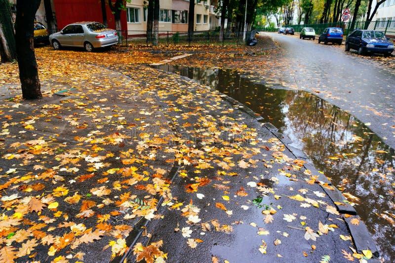 Folhas de outono na rua molhada fotografia de stock