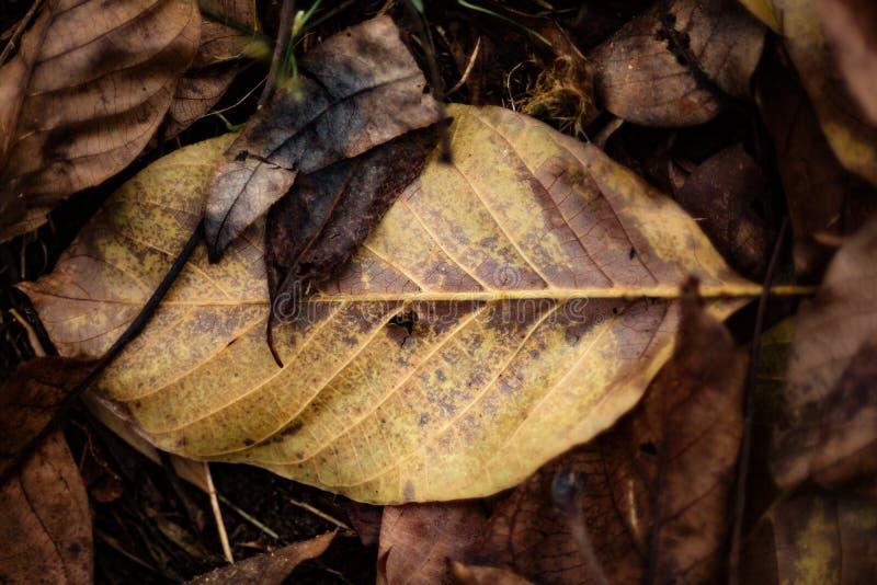 Folhas de outono na terra imagem de stock royalty free