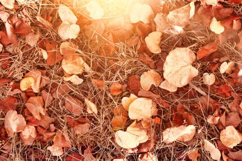 Folhas de outono na terra Papel de parede da queda Imagem tonificada fotos de stock