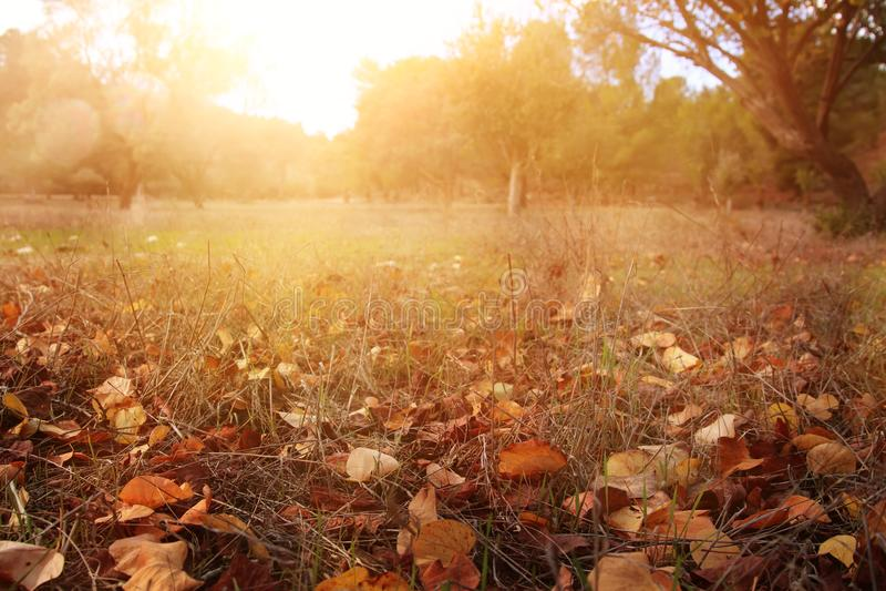 Folhas de outono na terra Papel de parede da queda Imagem tonificada fotografia de stock