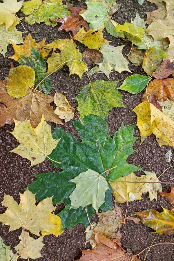 Folhas de outono no asfalto Fundo fotografia de stock royalty free