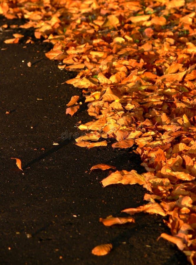 Folhas de outono no asfalto preto fotografia de stock royalty free