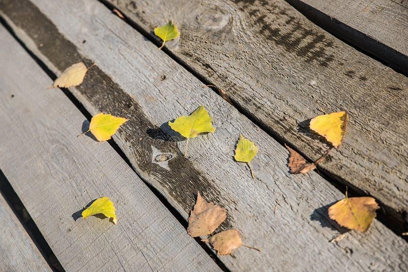 Folhas de outono no assoalho imagem de stock royalty free