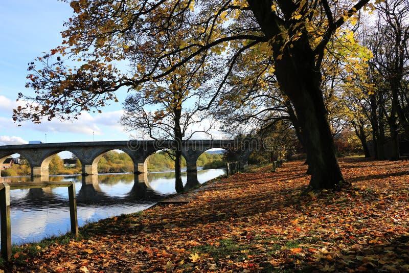 Folhas de outono no banco de rio foto de stock royalty free