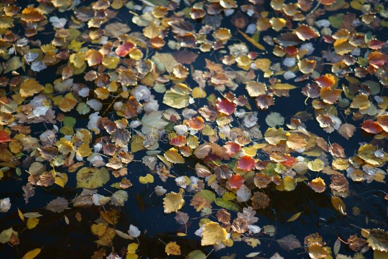 Folhas de outono no banco do rio foto de stock