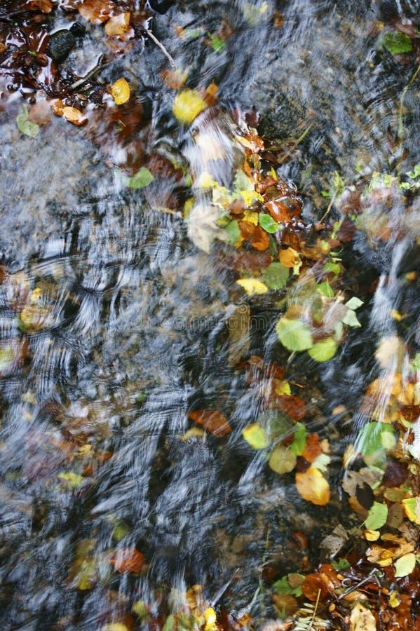 Folhas de outono no córrego imagens de stock royalty free