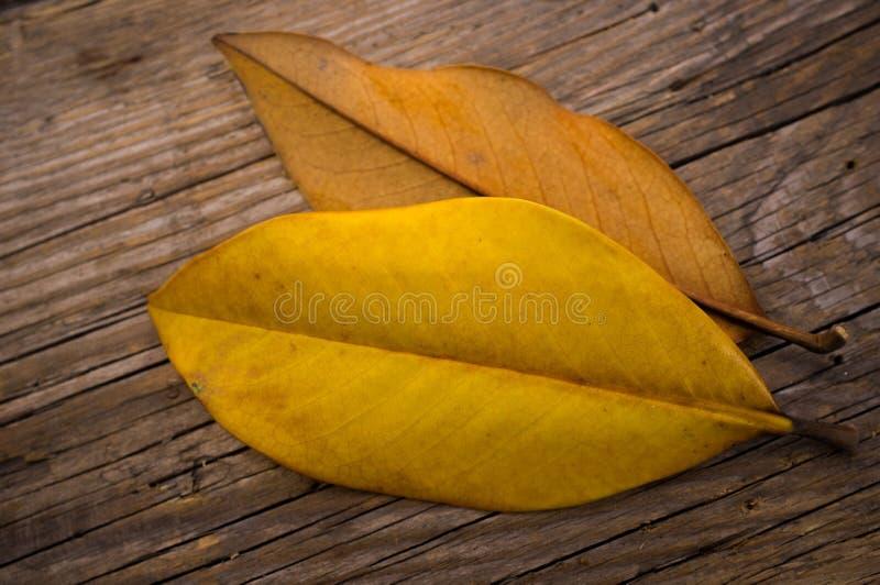 Download Conceito do outono foto de stock. Imagem de horizontal - 29832128