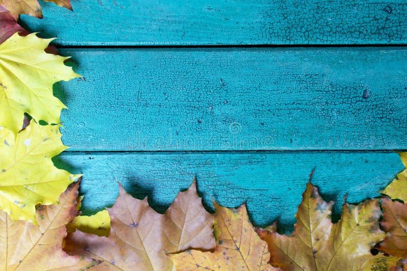 Folhas de outono no fundo de madeira do vintage azul verde com espaço da cópia, configuração lisa foto de stock