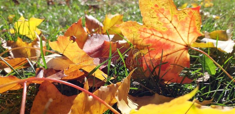 Folhas de outono no sol imagens de stock