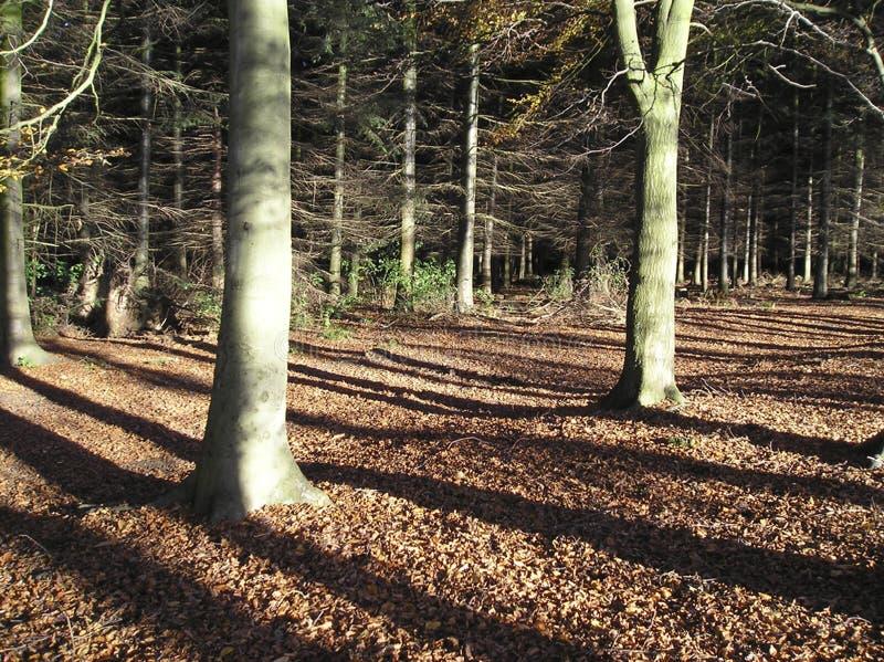 Download Folhas de outono (a queda) imagem de stock. Imagem de folhas - 110289