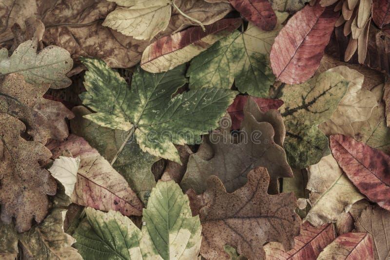 Folhas de outono secadas fotografia de stock royalty free