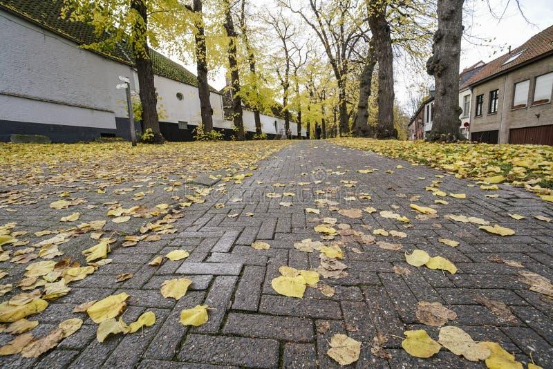 Folhas de outono secadas na terra em um parque fotografia de stock royalty free