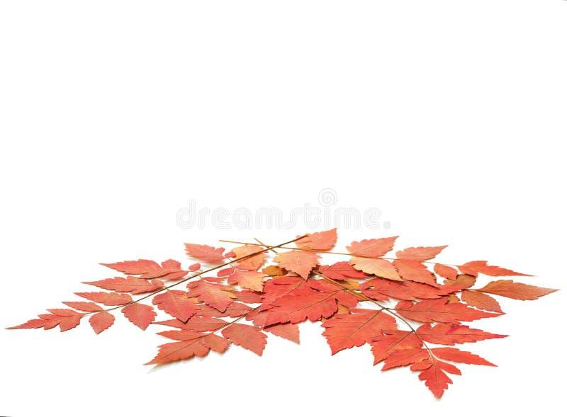 Folhas de outono secas fotos de stock royalty free