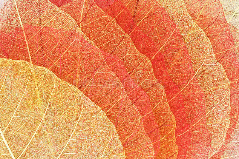 folhas de outono secas Amarelo-vermelhas imagens de stock royalty free