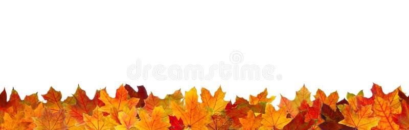 Folhas de outono sem emenda foto de stock