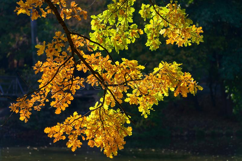 Folhas de outono vermelhas e verdes fotografia de stock