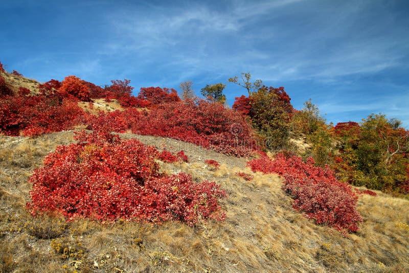 Folhas de outono vermelhas no sol imagens de stock royalty free