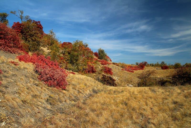 Folhas de outono vermelhas no sol foto de stock royalty free