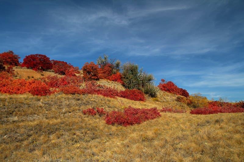 Folhas de outono vermelhas no sol imagem de stock