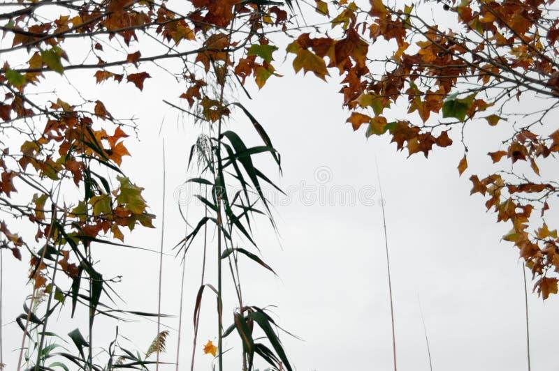 Folhas de outonos no céu foto de stock royalty free