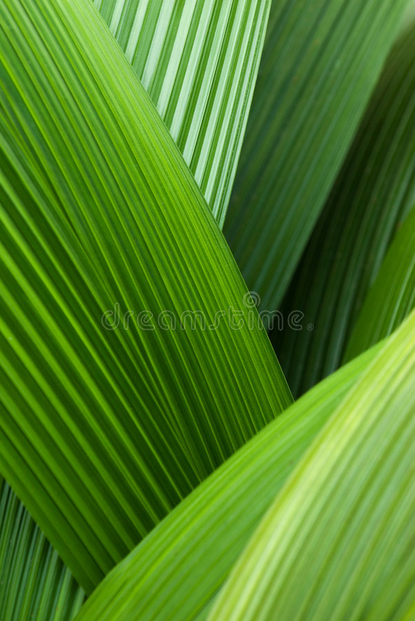 Folhas de palma abstratas fotos de stock