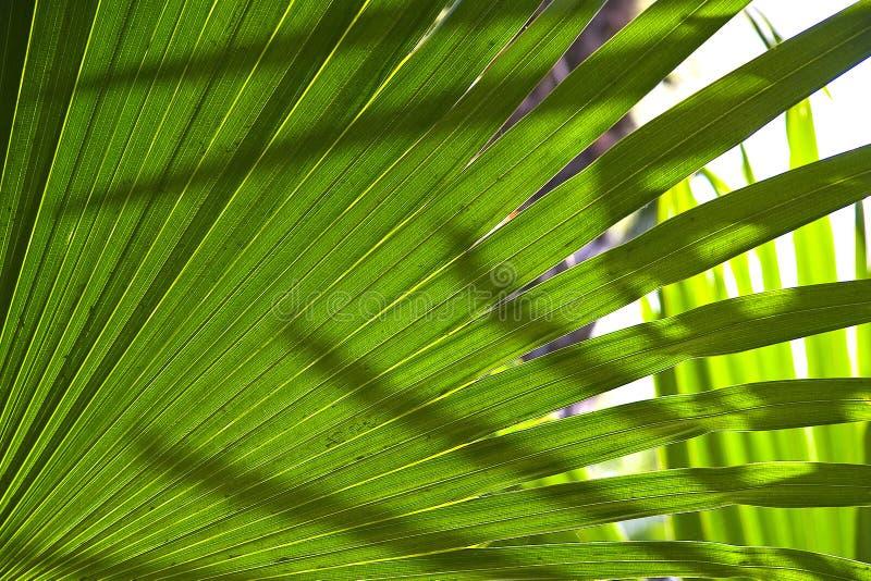 Folhas De Palmeira Foto de Stock Royalty Free