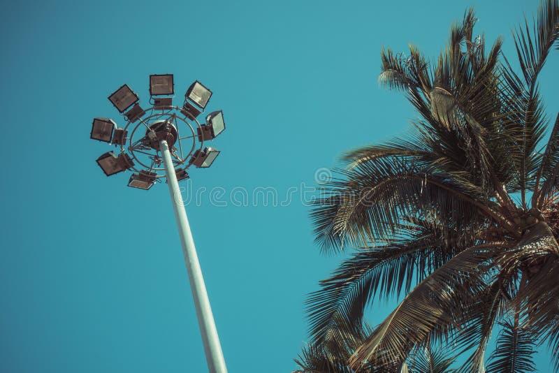 Folhas de palmeira e luz de rua verdes fotos de stock