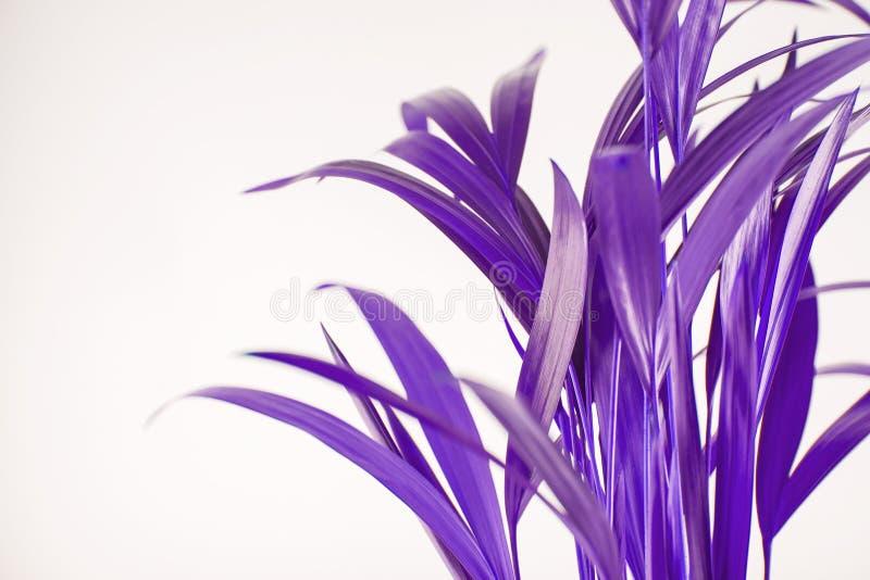 Folhas de palmeira exóticas tropicais no ultravioleta fotografia de stock royalty free