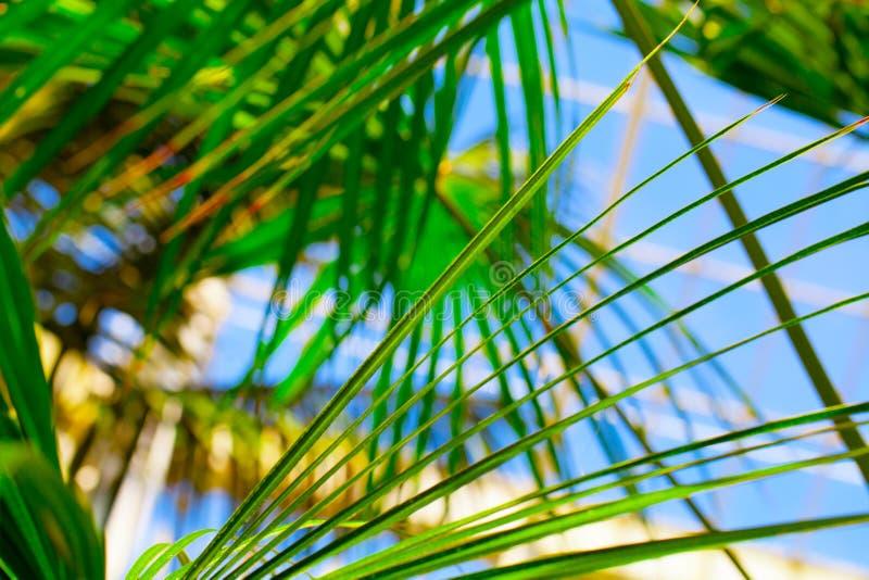 Download Folhas de palmeira foto de stock. Imagem de sunshine - 29826144