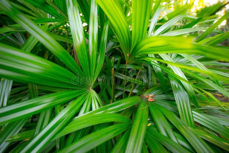 Folhas de palmeira no parque público foto de stock royalty free