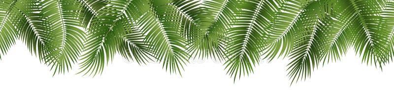 Folhas de palmeira sem emenda do verão do vetor no fundo branco ilustração stock