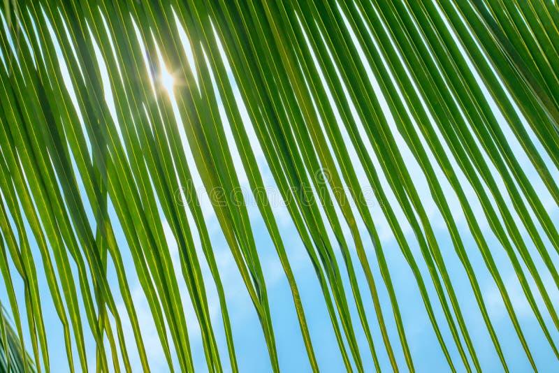 Folhas de palmeira, sol e mar fotografia de stock