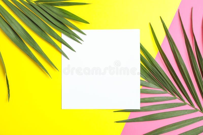Folhas de palmeira tropicais bonitas no fundo da cor imagens de stock royalty free