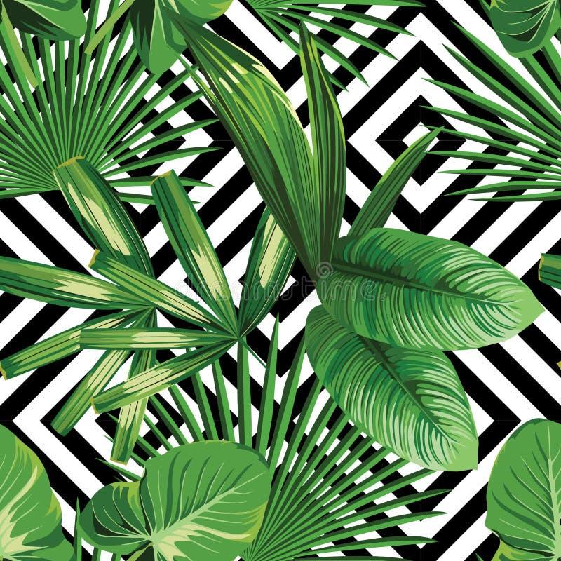 Folhas de palmeira tropicais da planta exótica da selva ilustração royalty free