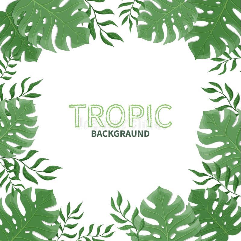 Folhas de palmeira tropicais do verão em um fundo branco ilustração royalty free