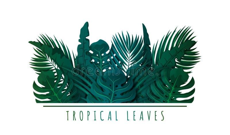 Folhas de palmeira tropicais Folhas e plantas ex?ticas Fundo floral para o projeto da bandeira, do inseto ou do convite ilustração do vetor