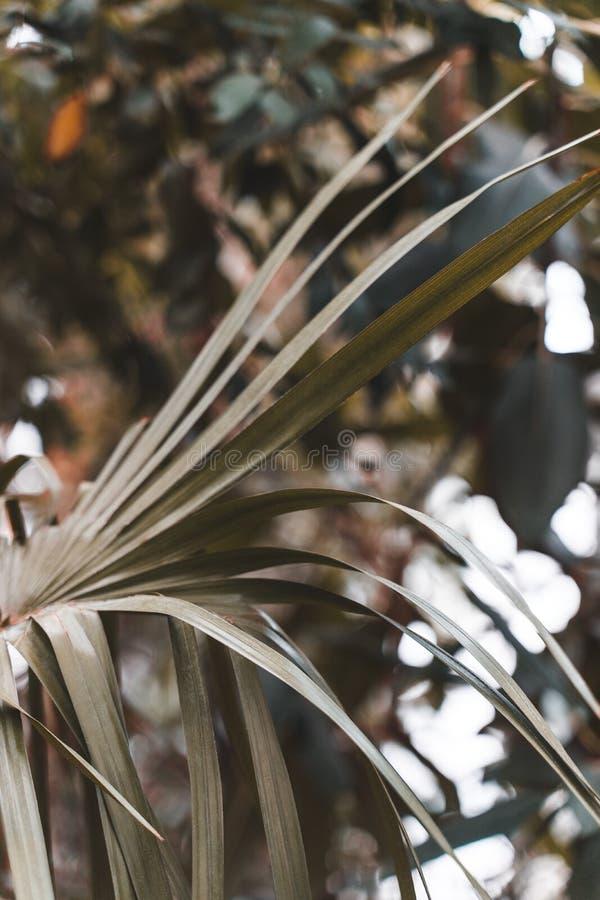 Folhas de palmeira tropicais no jardim, folhas verdes da planta tropical da floresta para o teste padrão da natureza e fundo imagens de stock royalty free