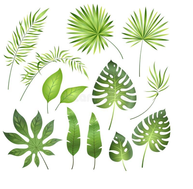 Folhas de palmeira tropicais Plumeria exótico da samambaia real da palma da folha da selva Feriado tropical da praia do paraíso d ilustração stock