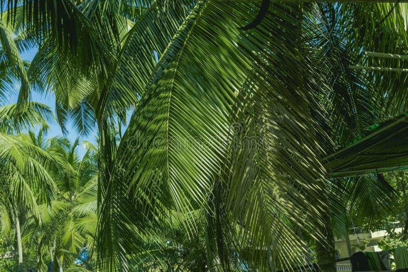 Folhas de palmeira tropicais, teste padrão floral foto de stock