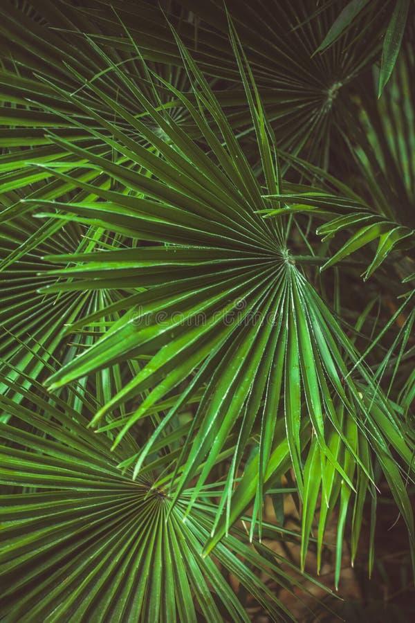 folhas de palmeira verdes vibrantes teste padrão, contexto abstrato floral do verão fotografia de stock