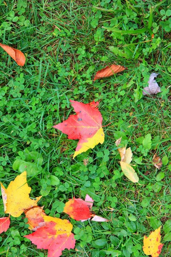 Folhas de plátano na terra imagens de stock