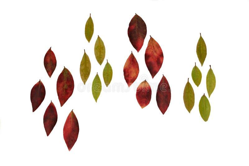 Folhas de queda imagens de stock