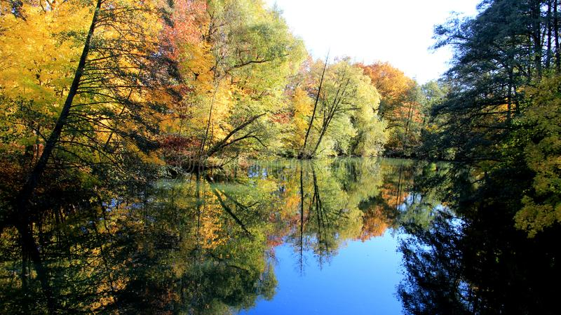 Folhas de queda coloridas da mudança da estação pelo lado do rio imagens de stock