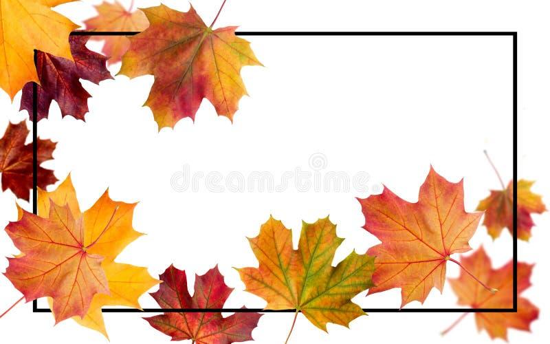 Folhas de queda do outono Queda outonal da folha e mosca da folha do álamo foto de stock