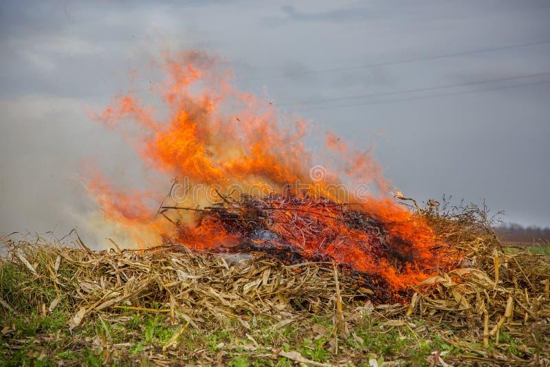 Folhas de queimadura, fogo ao limpar o jardim Tarefas do outono na exploração agrícola fotos de stock