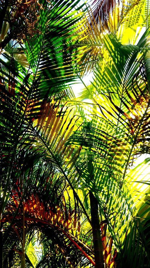 folhas de relaxamento da palmeira imagem de stock royalty free