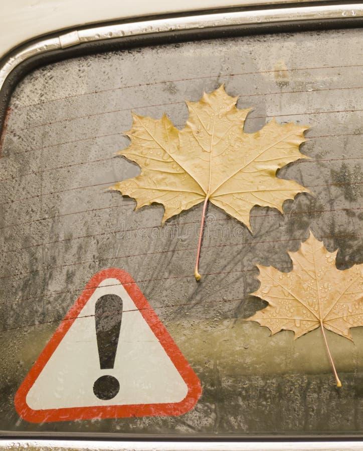 Folhas de um bordo no vidro do automóvel imagem de stock royalty free
