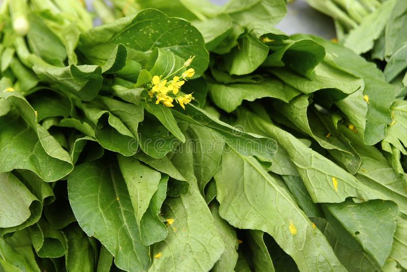 Folhas de verde de mostarda chinesa com as flores amarelas no mercado de rua fotos de stock