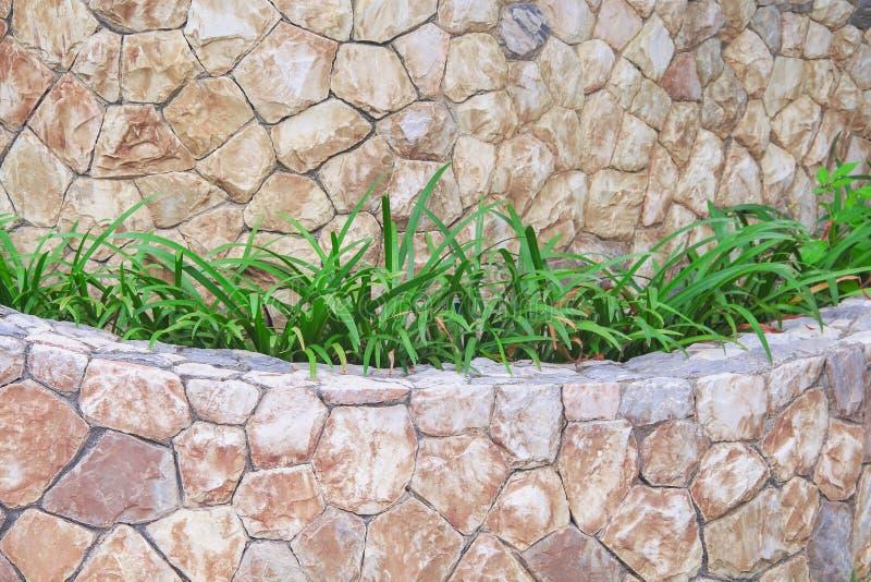 Folhas decorativas das plantas verdes da natureza, crescendo no fundo da parede de pedra fotos de stock