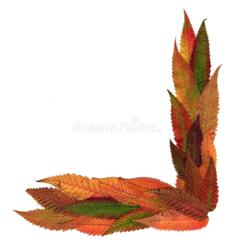 Folhas decorativas pressionadas multicoloridos em formulários da geometria fotografia de stock